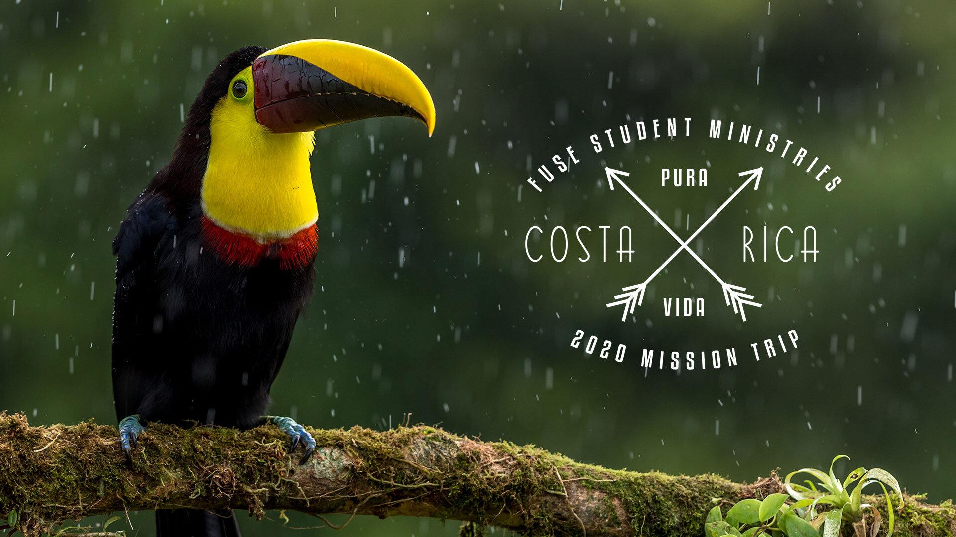 BIRD-COSTA-RICA.jpg