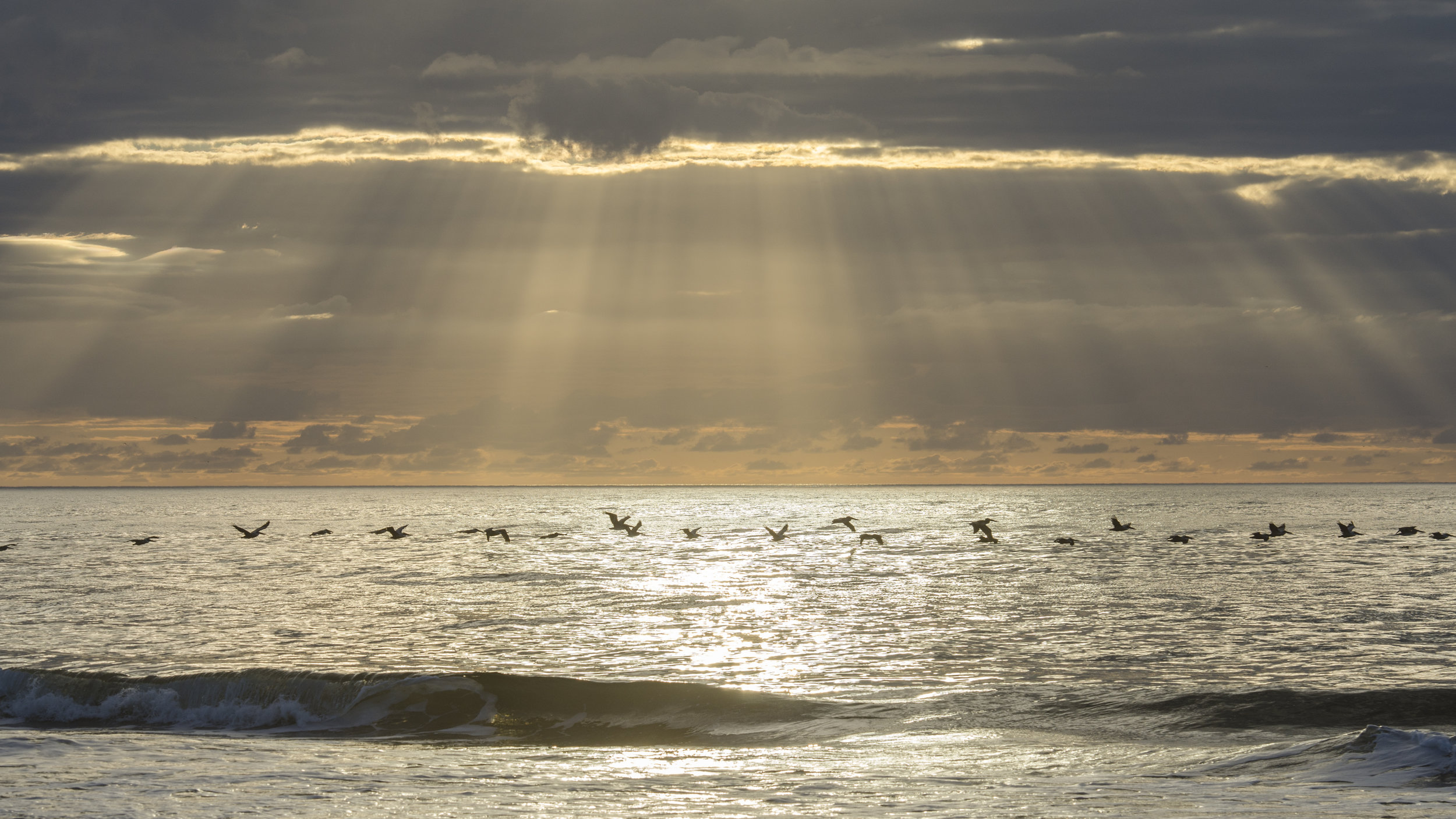 Pelicans and God Beams, Sunset Beach