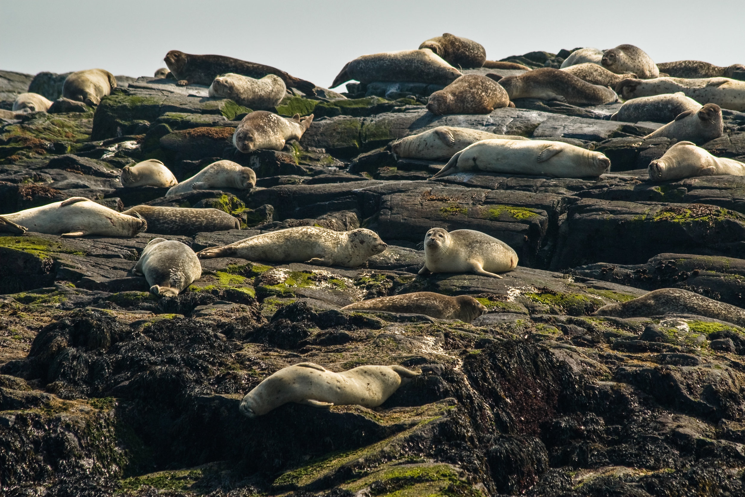 Seal Rookery, Bay of Fundy