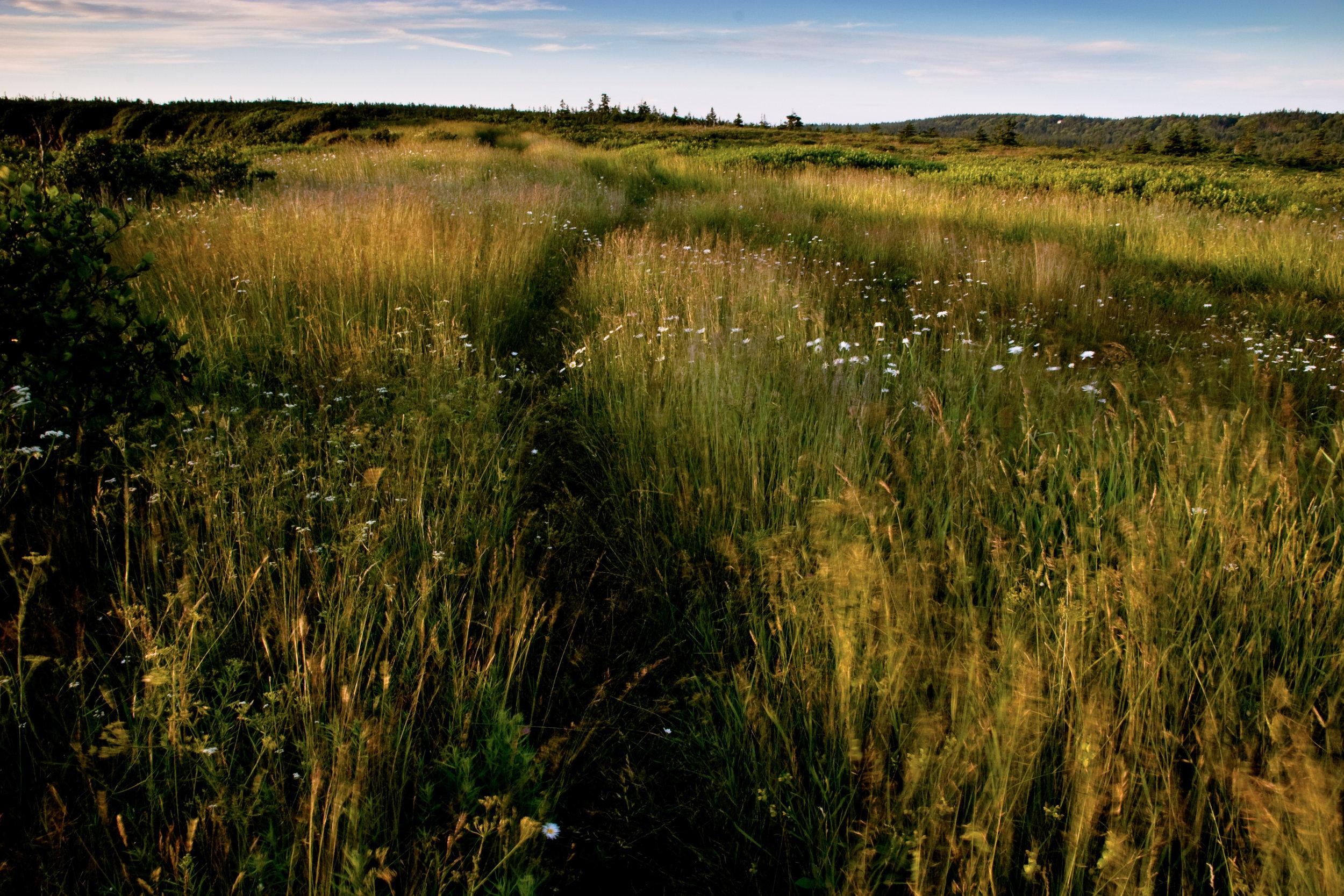 South West Head Meadow