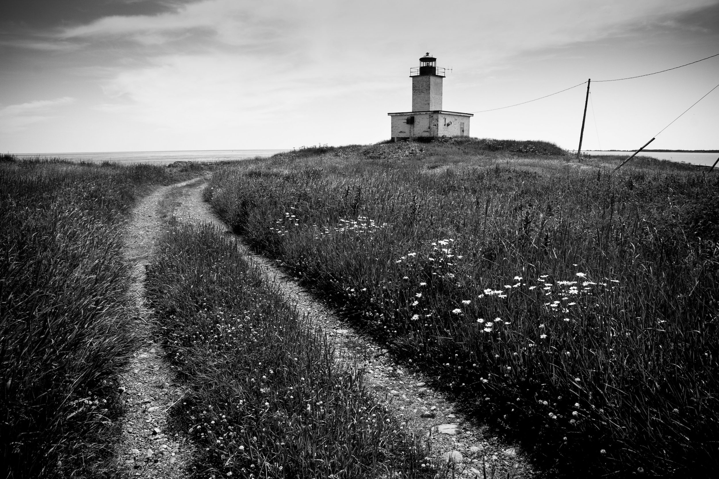 White Head Island Lighthouse and Daisies