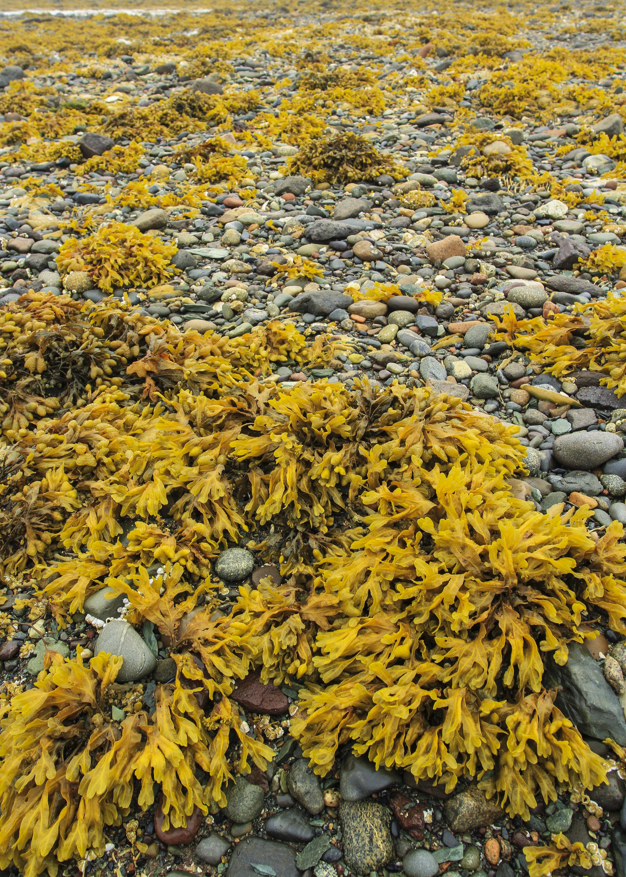 Low Tide, Anchorage Provincial Park