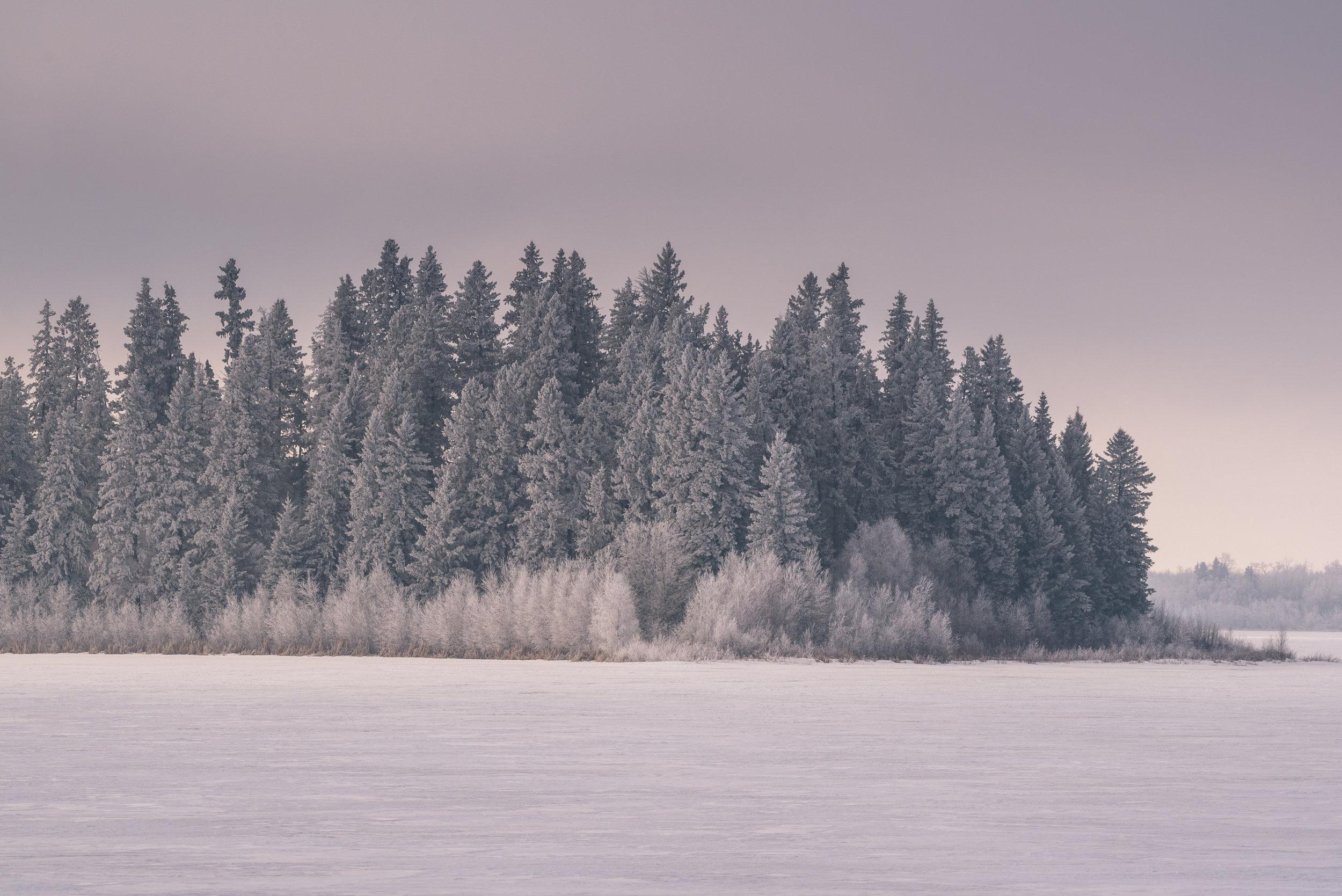 Hoar Frost, Astotin Lake, Elk Island National Park