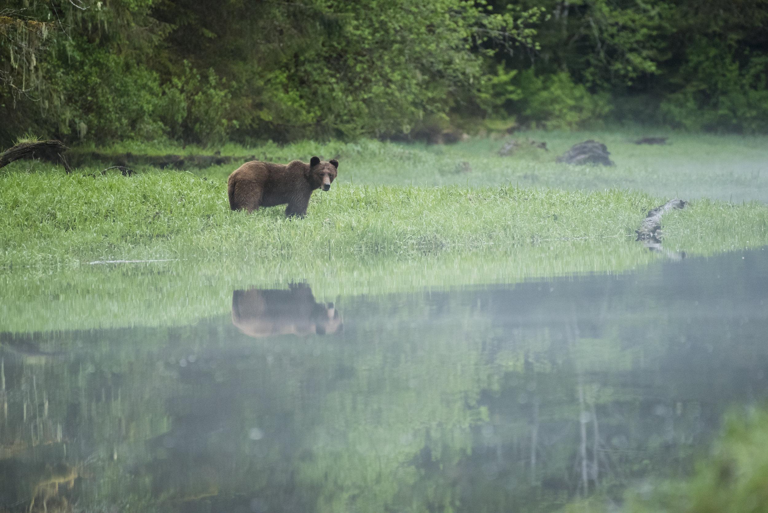 Khutzeymateen Provincial Park, British Columbia