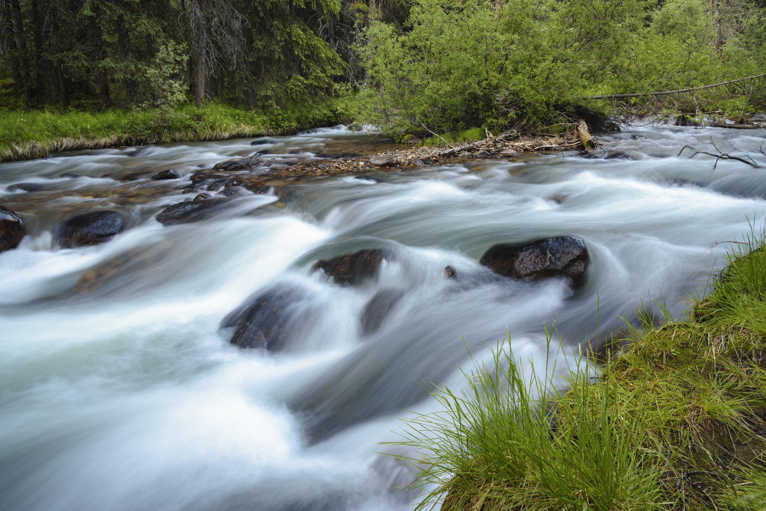 Jonas Creek, Jasper National Park