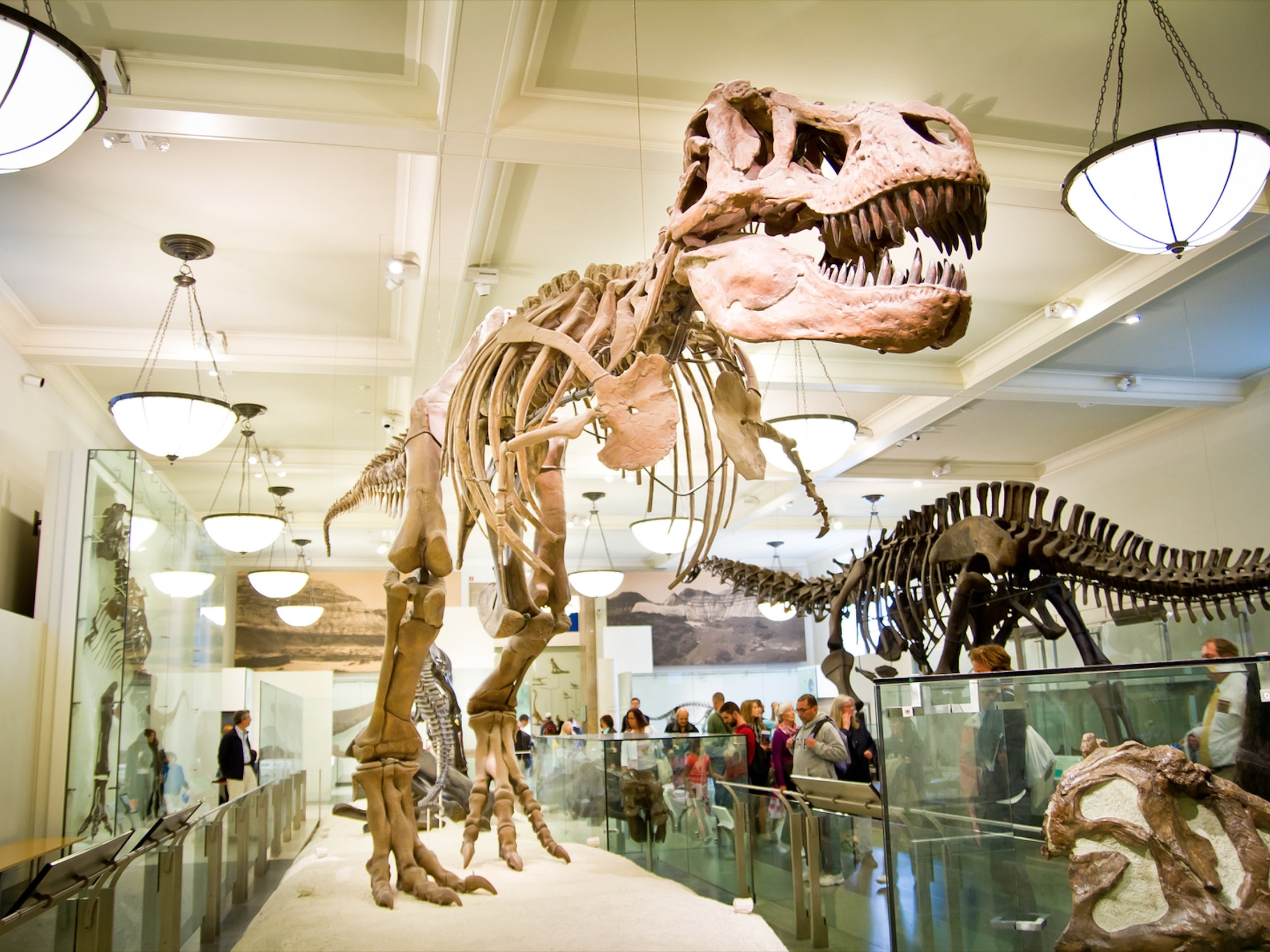 American Museum of Natural History - Central Park West & 79th St, New York, NY 10024