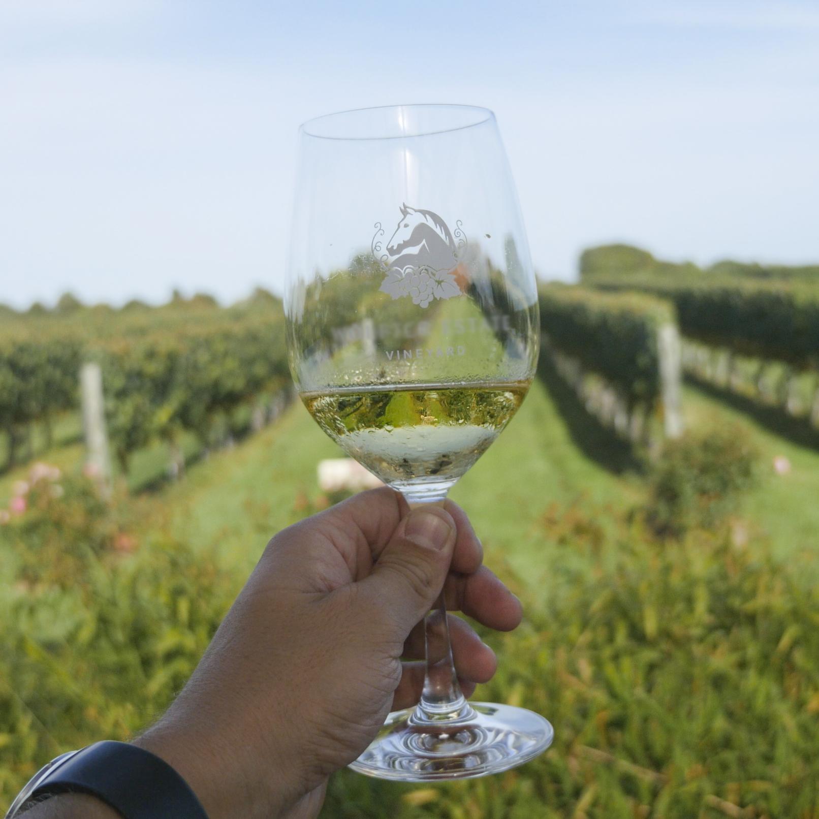 Местные винодельни - Предлагаем попробовать местное вино