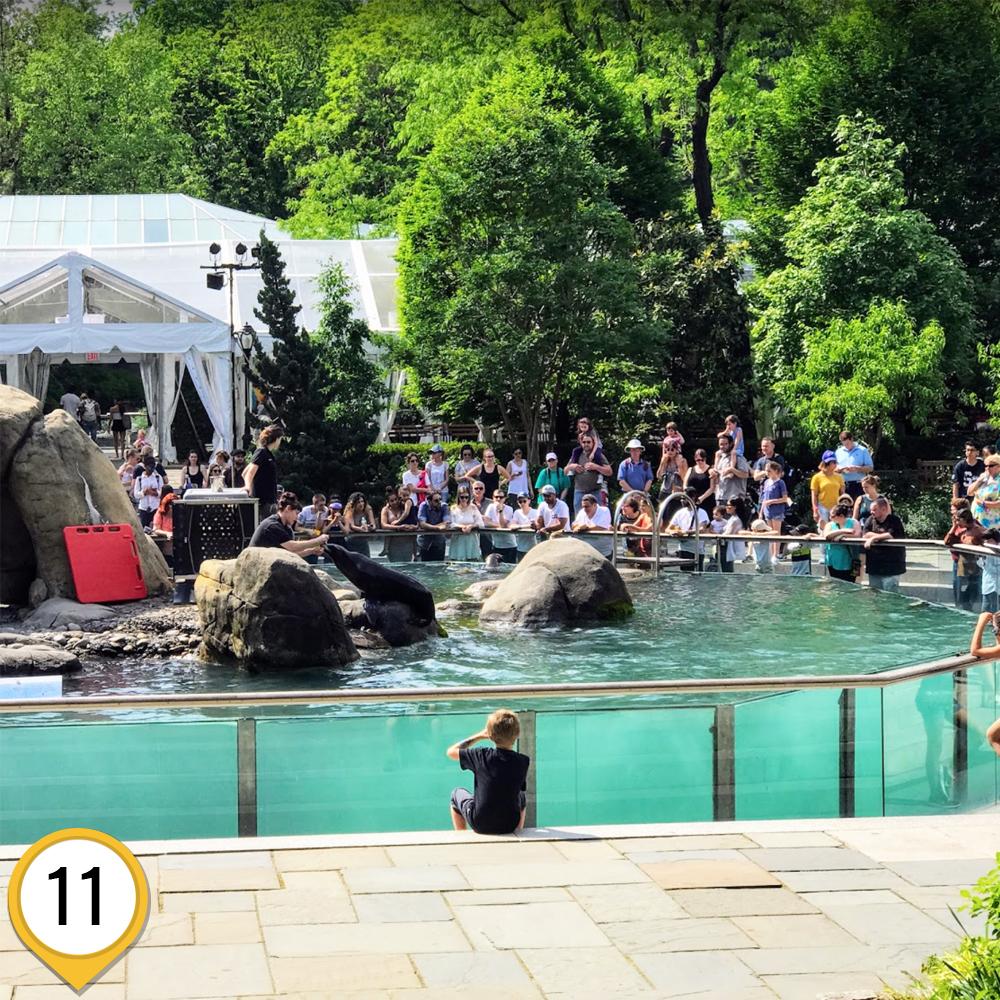 зоопарк_центрального_парка_маршрут1_ньюйорк_ньюйоркгид.jpg