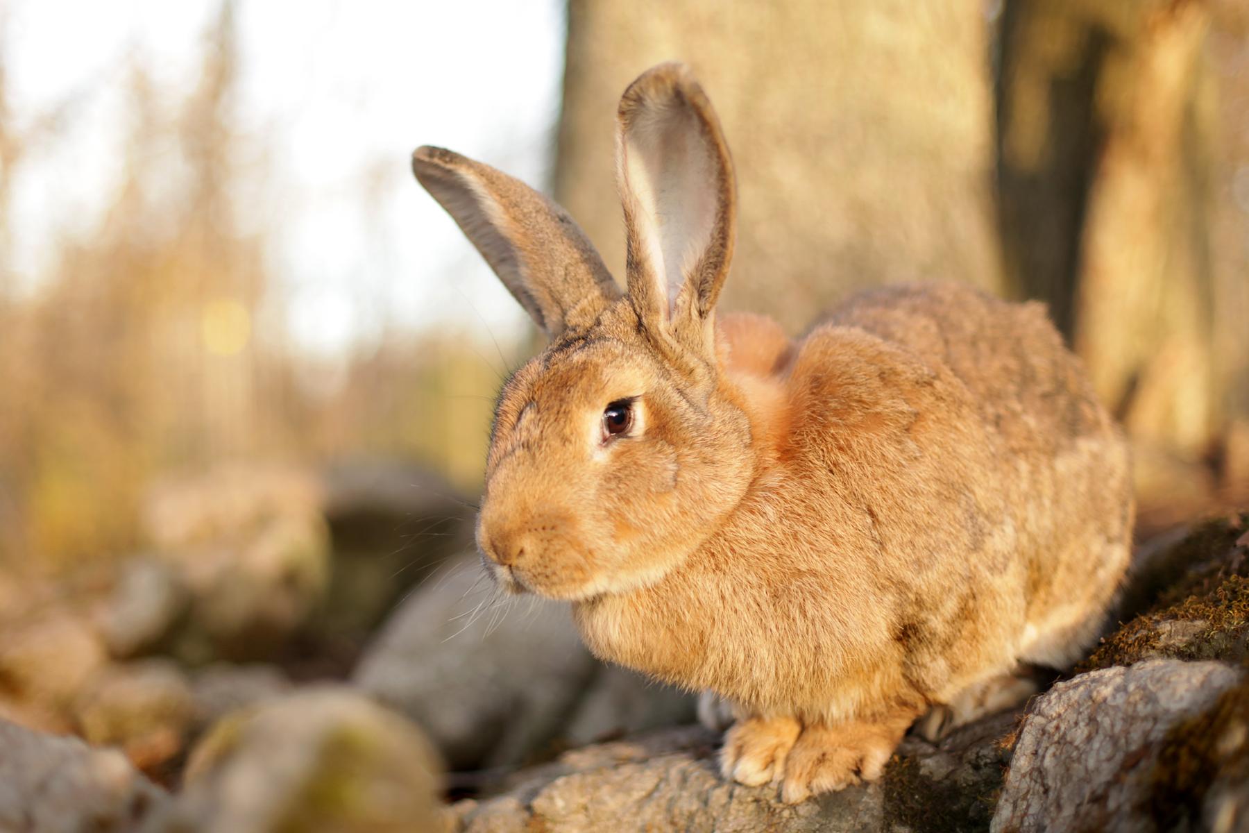 Benedict_rabbit.jpg