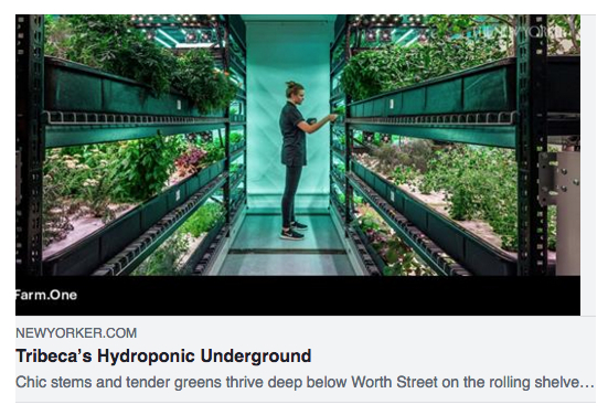 newyorker.com.jpg