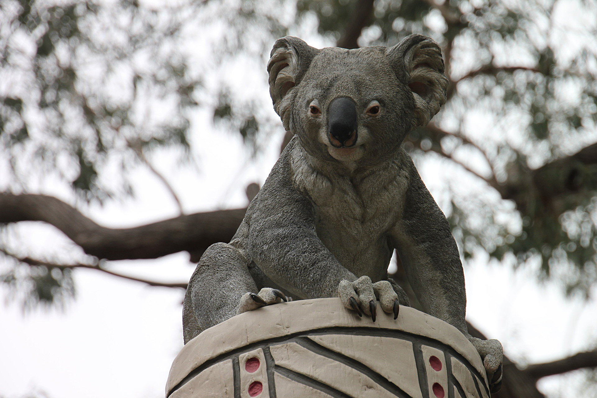 koalas2.jpg