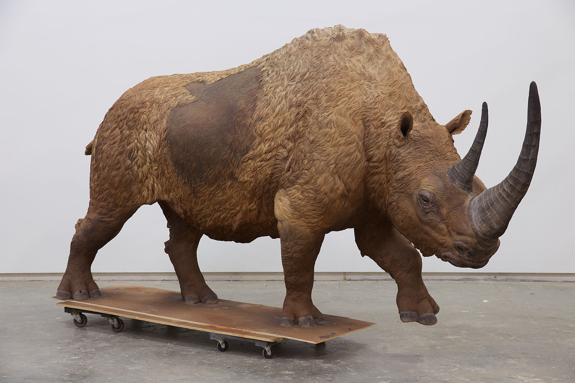rhinofull.jpg