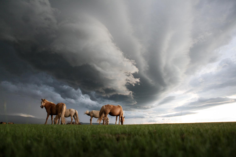 On the open steppe outside of Kharkhorin, Mongolia, a few mongol horses graze as a fierce hail storm approaches.