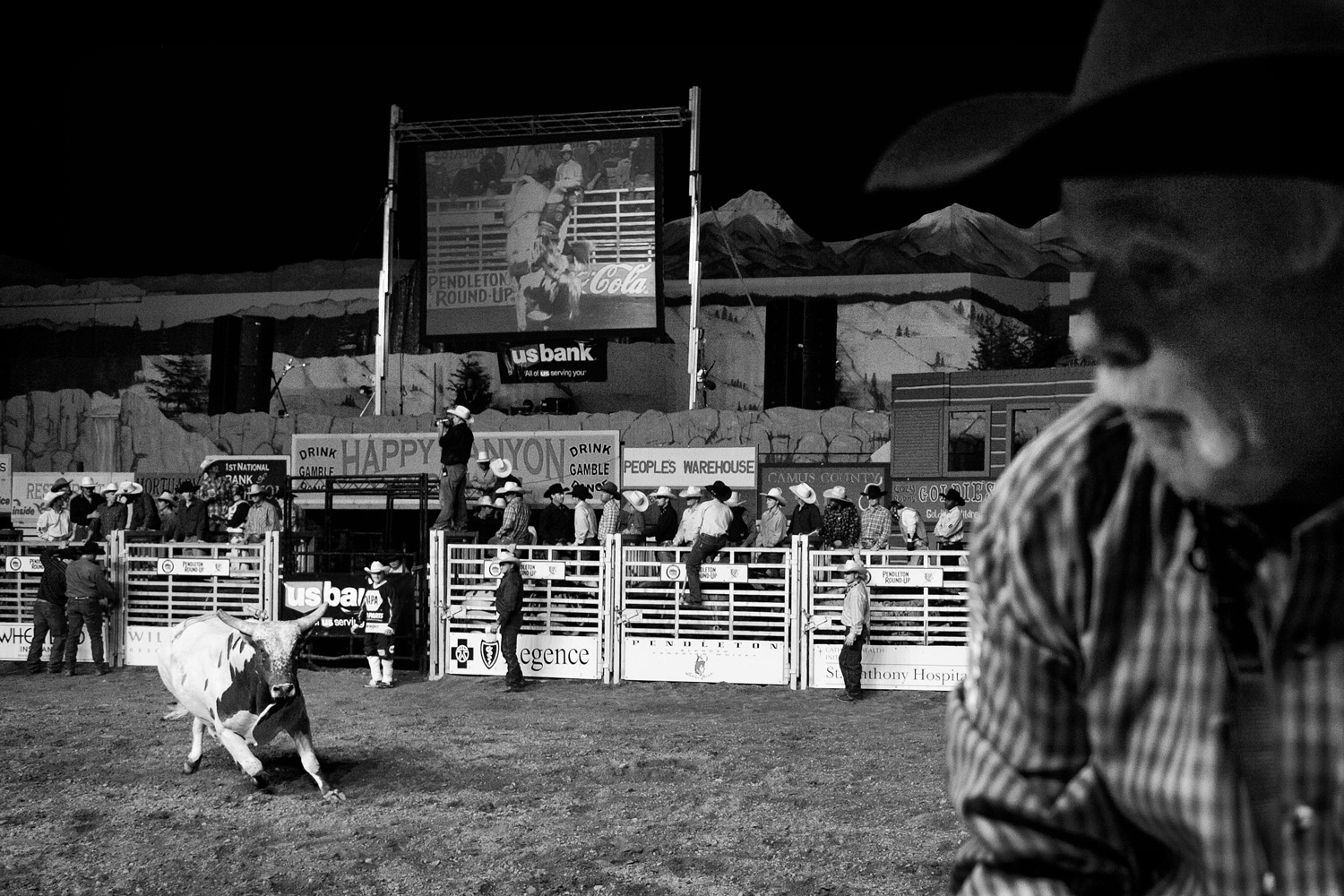 Bulls attack because of trained response, agitation and movement of others around them. During the bull-riding event, rodeo clowns, as well as professional photographers like this man, may attract the bull's attention.