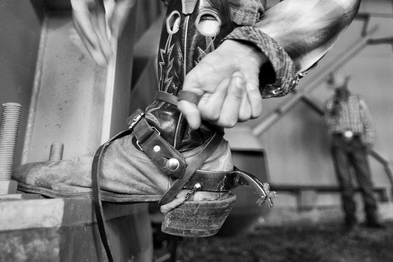 "A cowboy tightens the leather lacing that affixes the spurs to his boot. The standard five-point rowel, donned during riding competitions, digs into the livestocks' torso and encourages the animal to buck. This action results in a ""wilder"" ride, thus adding to the overall event scoring."