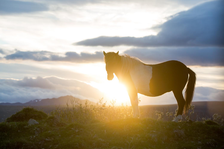 20150716_National_Geographic_Iceland_0611.jpg