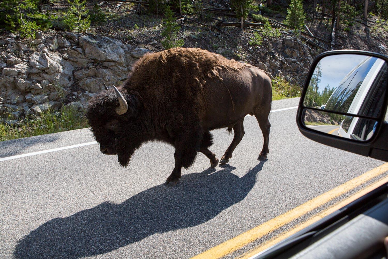 20150702_National_Geographic_Yellowstone_0576.jpg