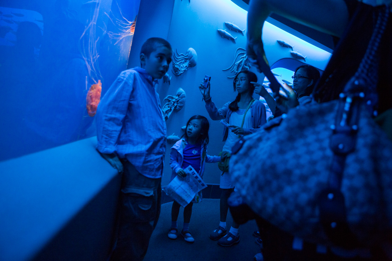 A family observes a jellyfish display at the Monterey Bay Aquarium.