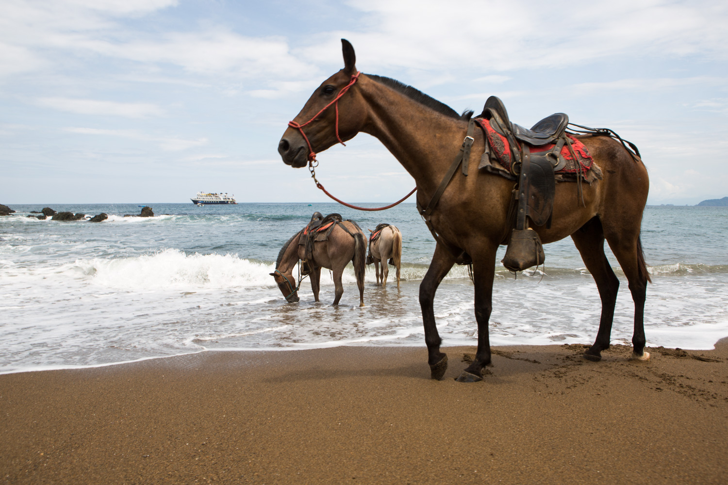 In Caletas Reserve, Osa Peninsula, several horses stand on the sandy beach and in the water while an expedition vessel anchors nearby.