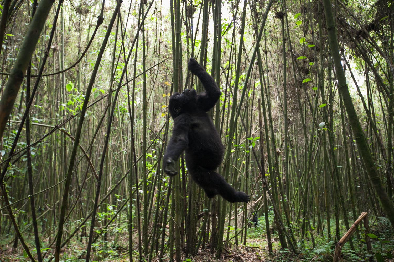 20130916_Rwanda_Uganda_Africa_1033.jpg