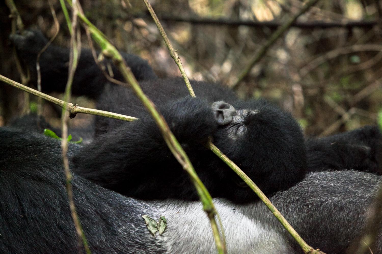 20130916_Rwanda_Uganda_Africa_1232.jpg