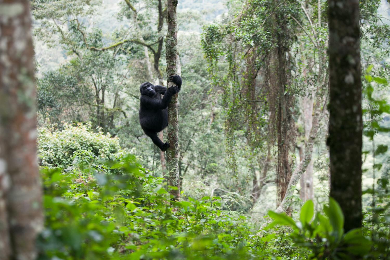20130916_Rwanda_Uganda_Africa_1795.jpg