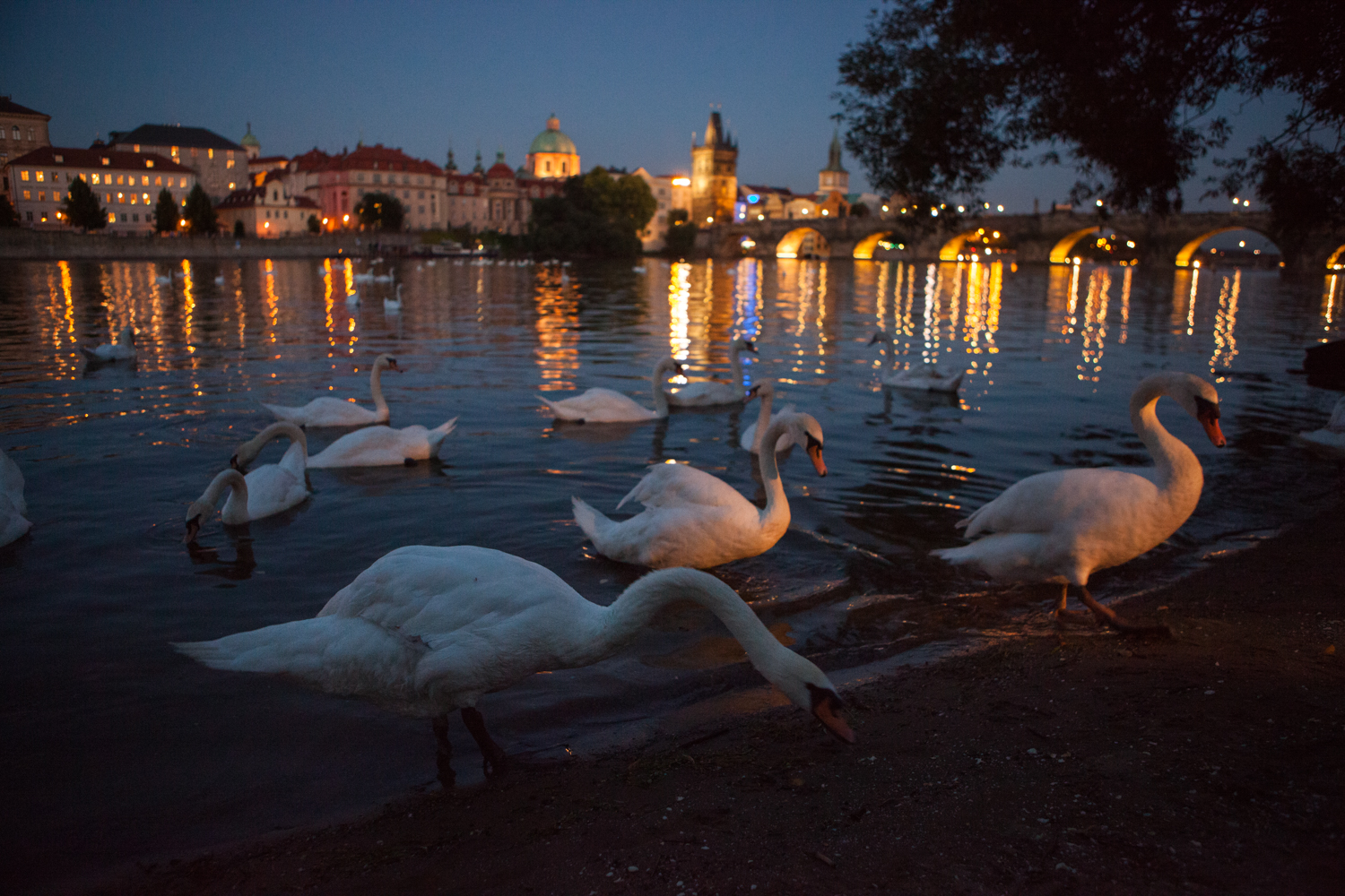 20140701_Prague_National_Geographic_Student_Expeditions_0765.jpg