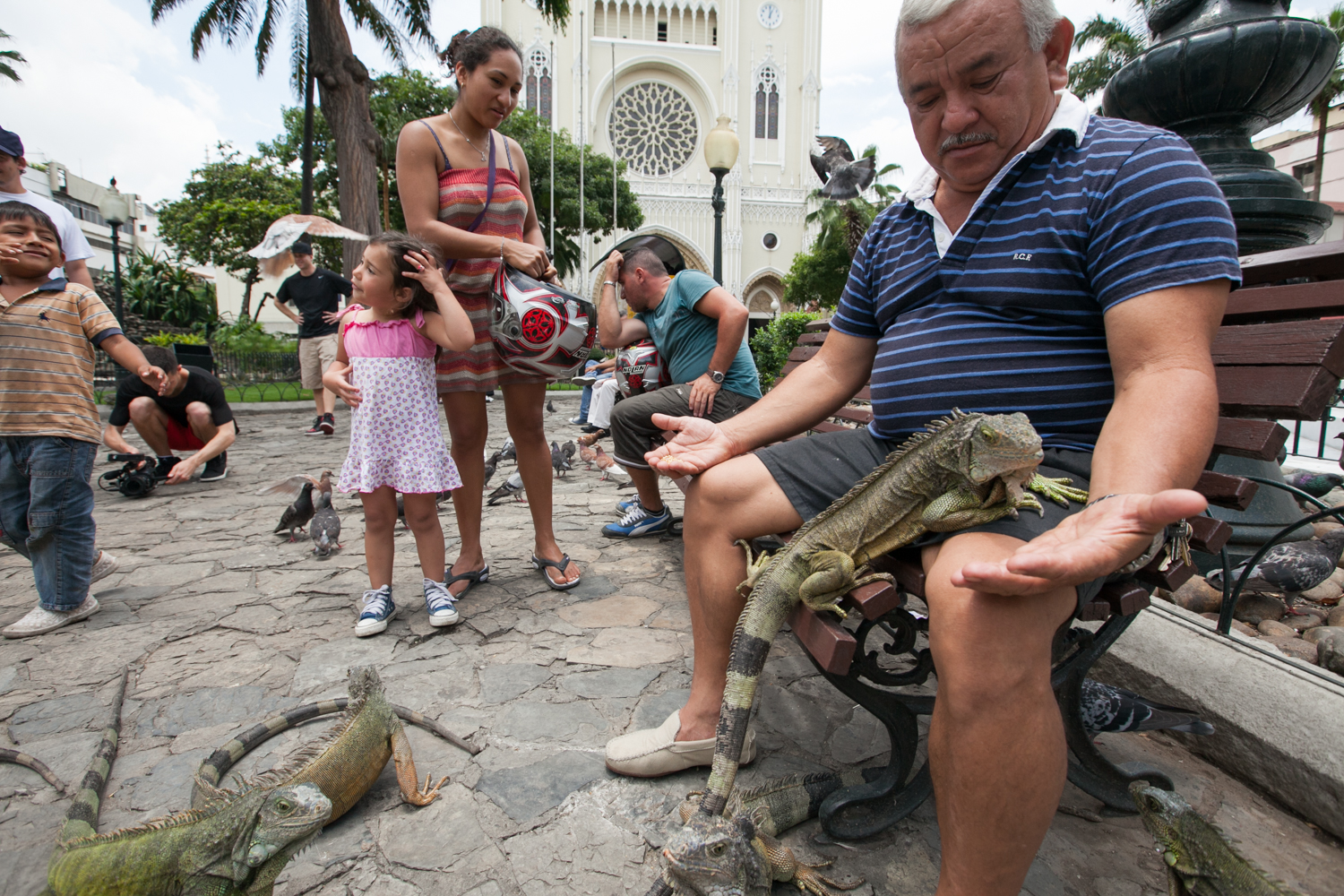 An iguana park is located in Guayaquil's city center across from the main cathedral. People gather to feed and play with the iguanas.