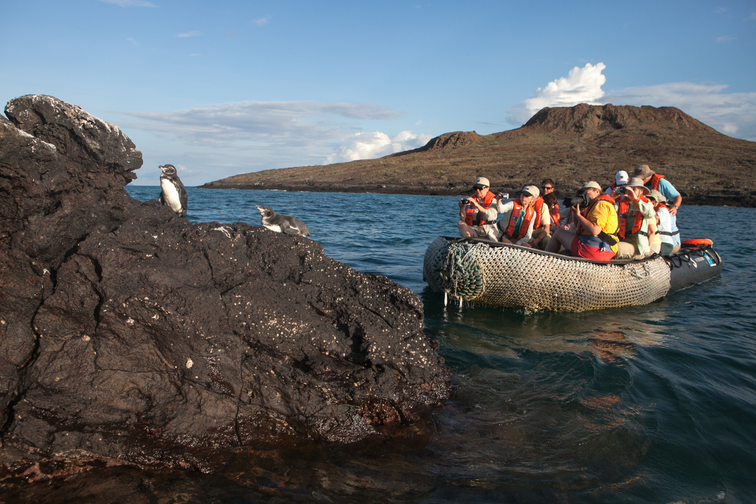 In the Galapagos Islands, tourists observe and photograph several Galapagos penguins resting on a rock formation.