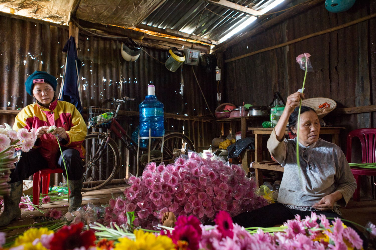 In Dalat, Vietnam, two women sit on the floor and attach a plastic covering to protect recently cut flowers that will be shipped to market.