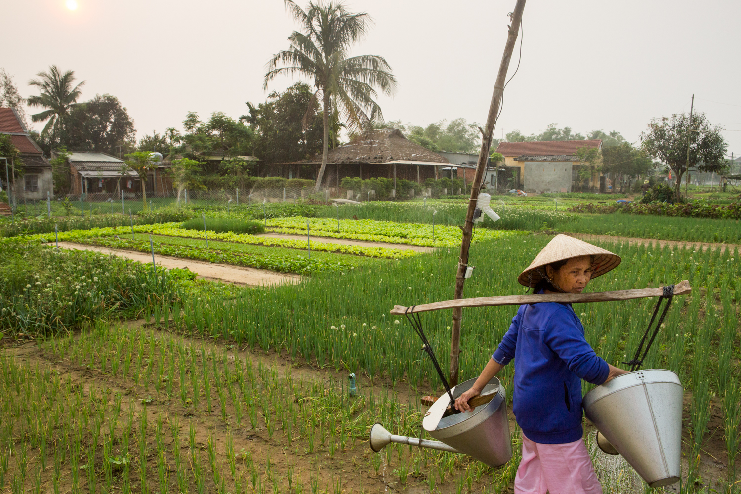 In a Hoi An village, a woman carries two watering cans on her shoulders, as she scans her fields.