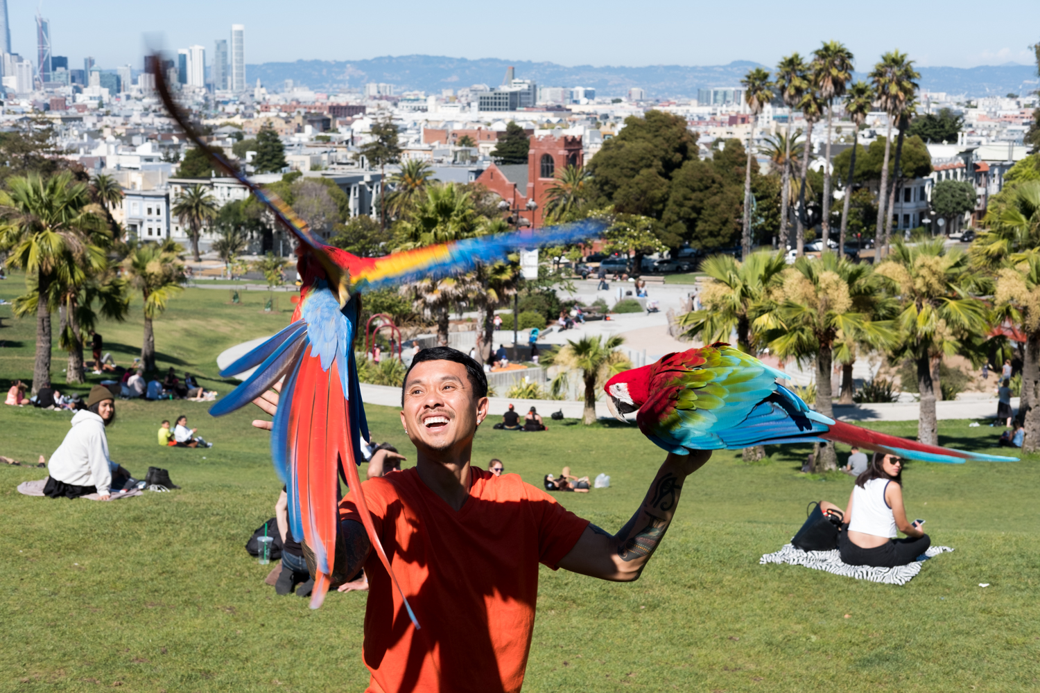 Chan the Bird Man flies his scarlet macaws in San Francisco's Mission Dolores Park.