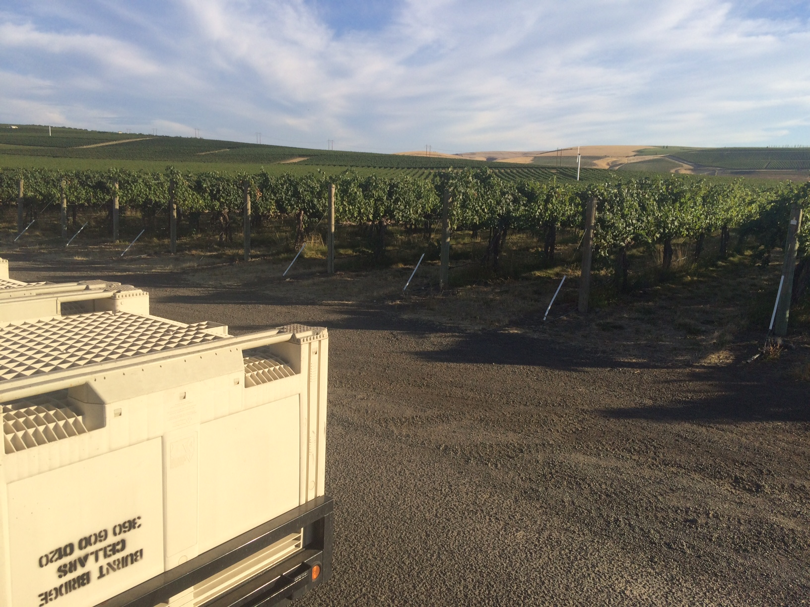 Getting ready to drop the first bins of the season at Seven Hills Vineyard.