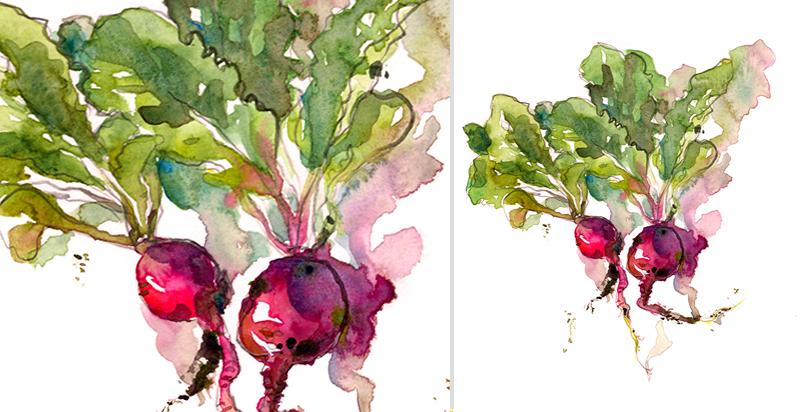 RADISH, watercolor