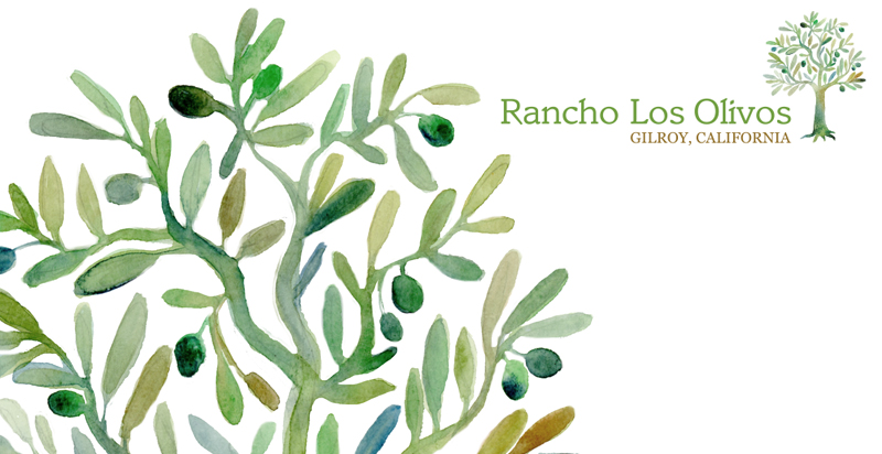 LOGO ILLUSTRATION , RANCH LOS OLIVOS, Created for Articulate Solutions, Inc., Gilroy, California