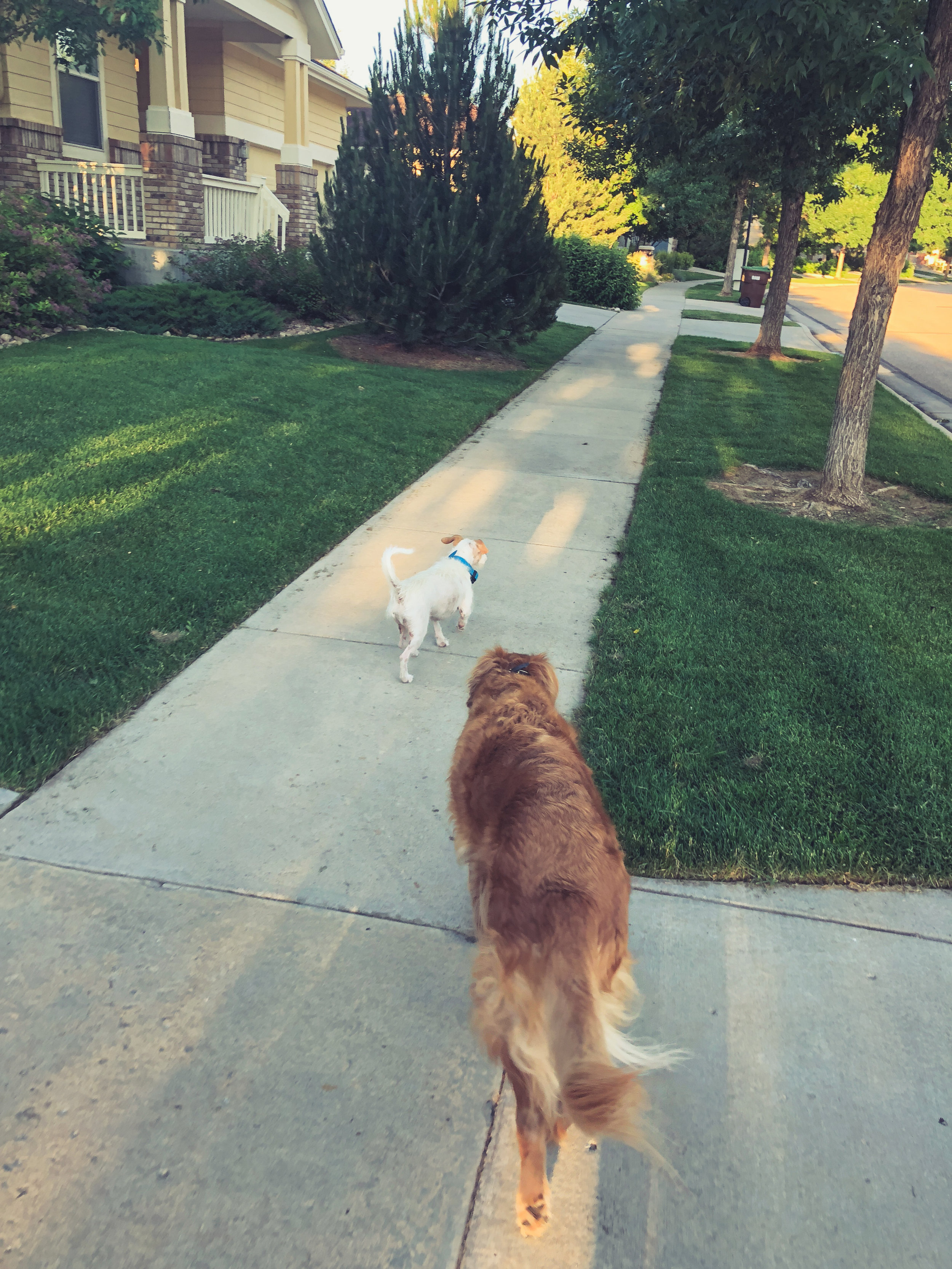 6:30AM - Walk the hounds. Take them around the neighborhood to clear rabbits and clean up edible debris.