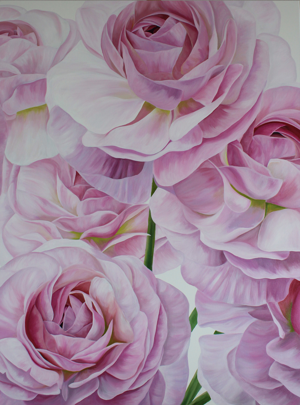 RANUNCULUS  36X48 INCHES  ACRYLIC ON CANVAS  PRIVATE COMMISSION