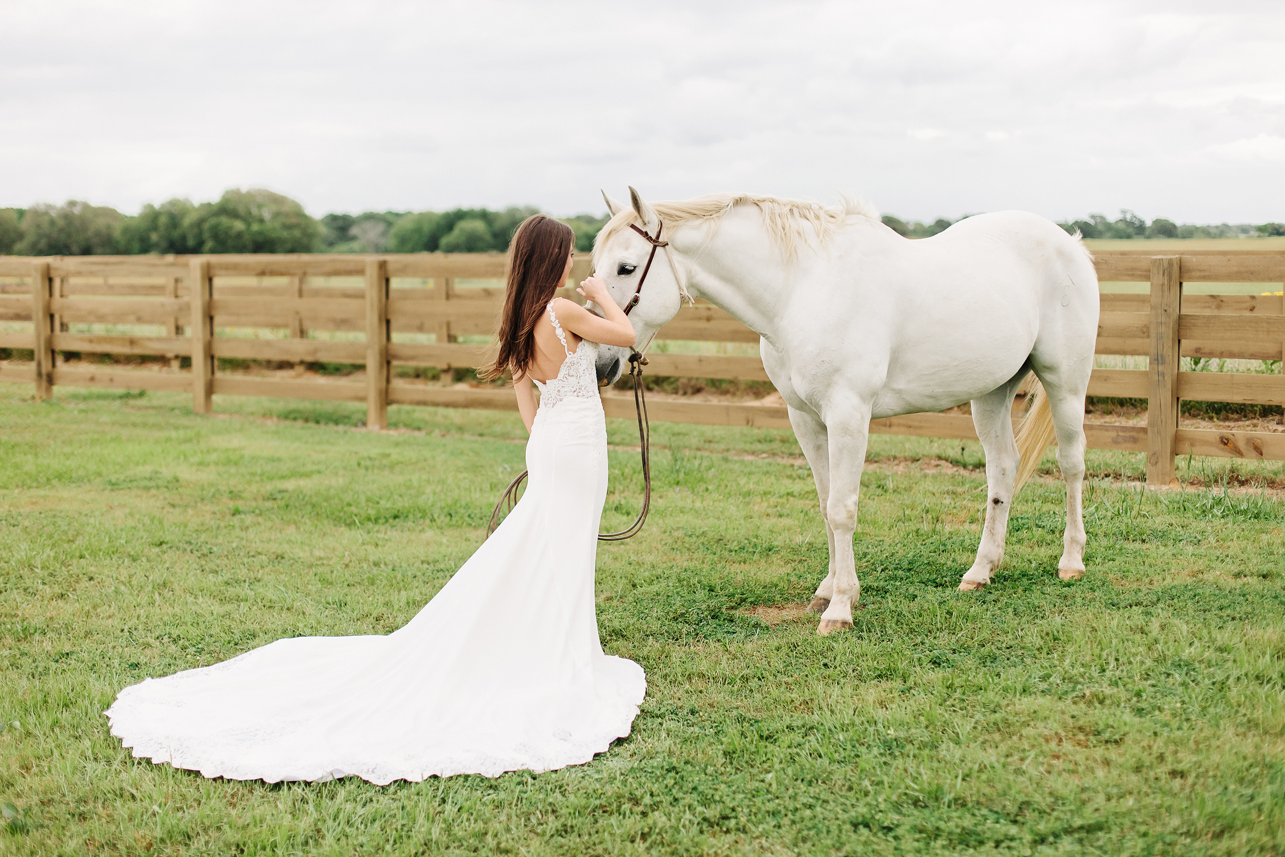 Bride with White Horse | Cassie Schott Photography