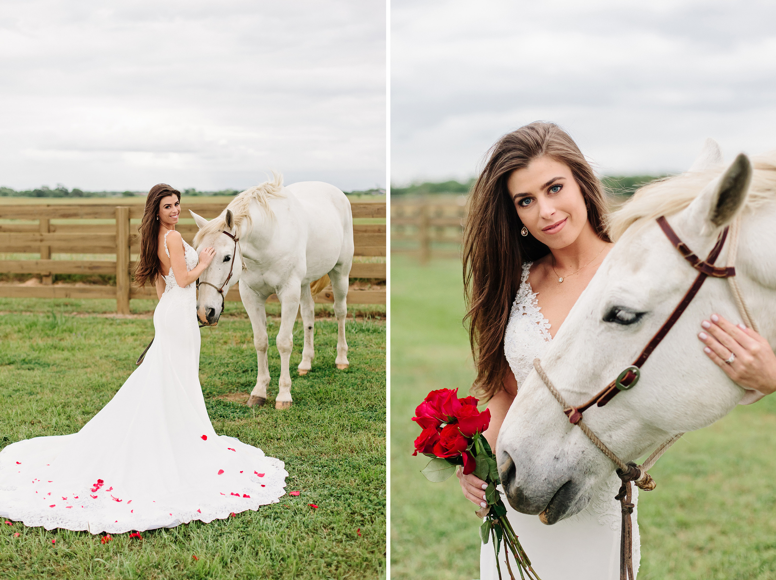 Bride with White Horse and Red Roses | Cassie Schott Photography