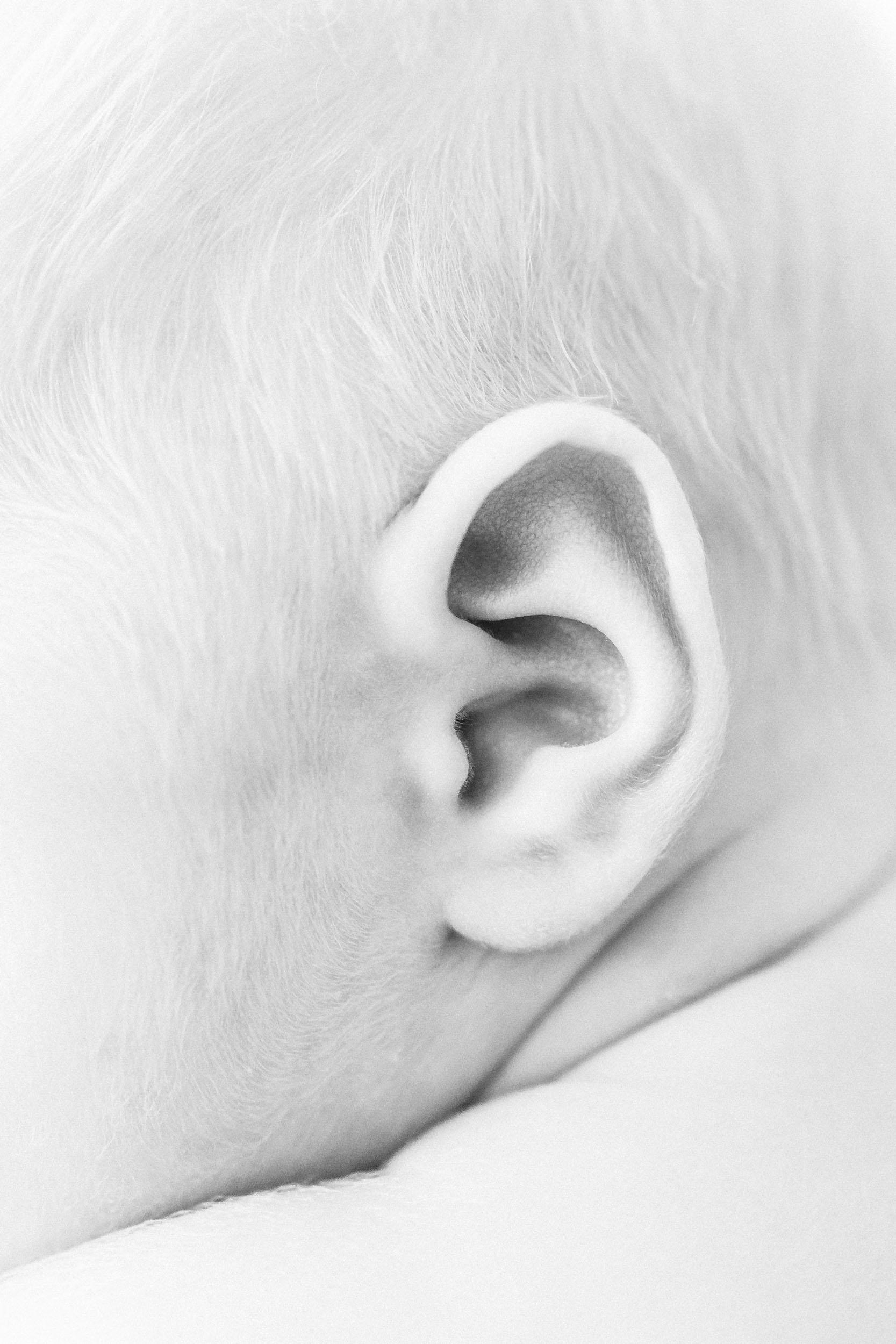 Geneva Illinois Newborn Photographer_Cassie Schott Photography_Baby Ear.jpg