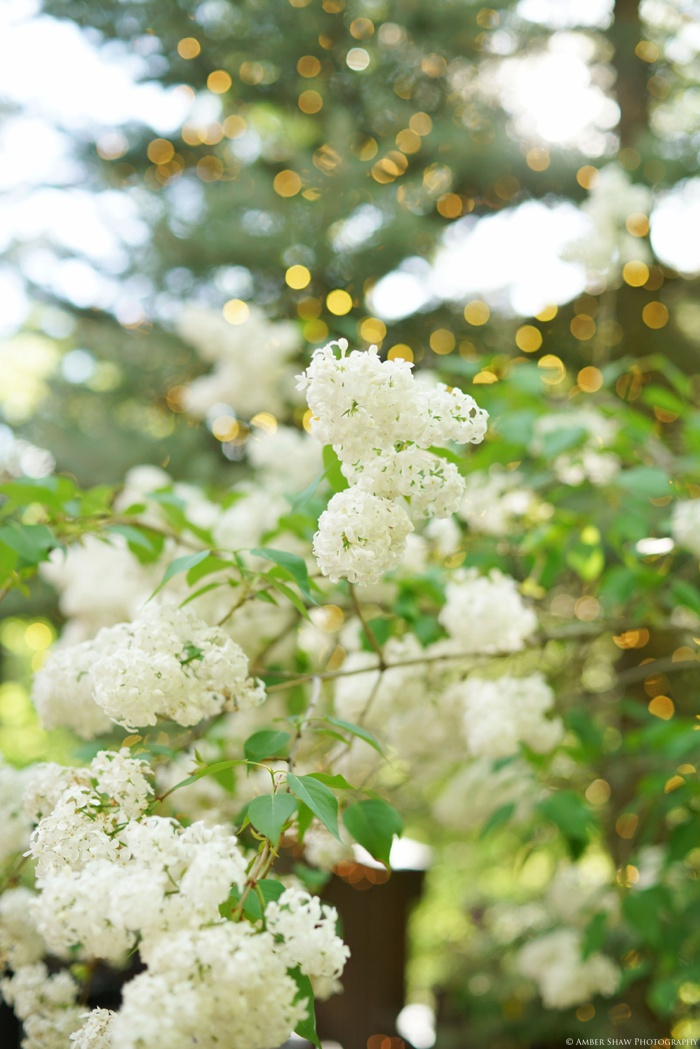 Millcreek_Inn_Wedding_Utah_Photographer_0043.jpg