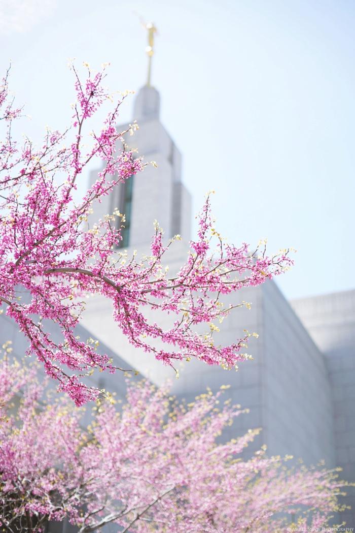 Draper_Temple_Wedding_Marleys_Reception_Utah_Wedding_Photographer_0067.jpg