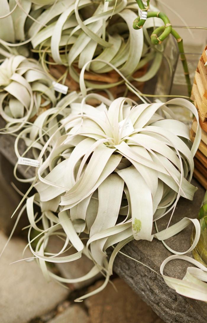 Cactus_and_Tropicals_Wedding_Salt-Lake_City_Utah_Photographer_0003.jpg