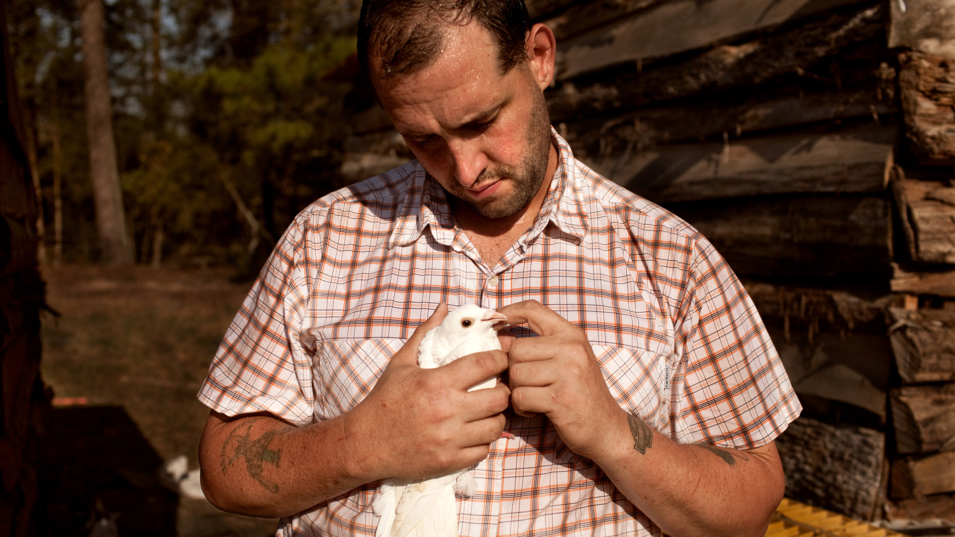 U.S. Army veteran Alex Sutton cradles a rock dove show pigeon, one of many heritage poultry breeds being raised on his 43 acre farm in Moore County, North Carolina in the spring of 2012.