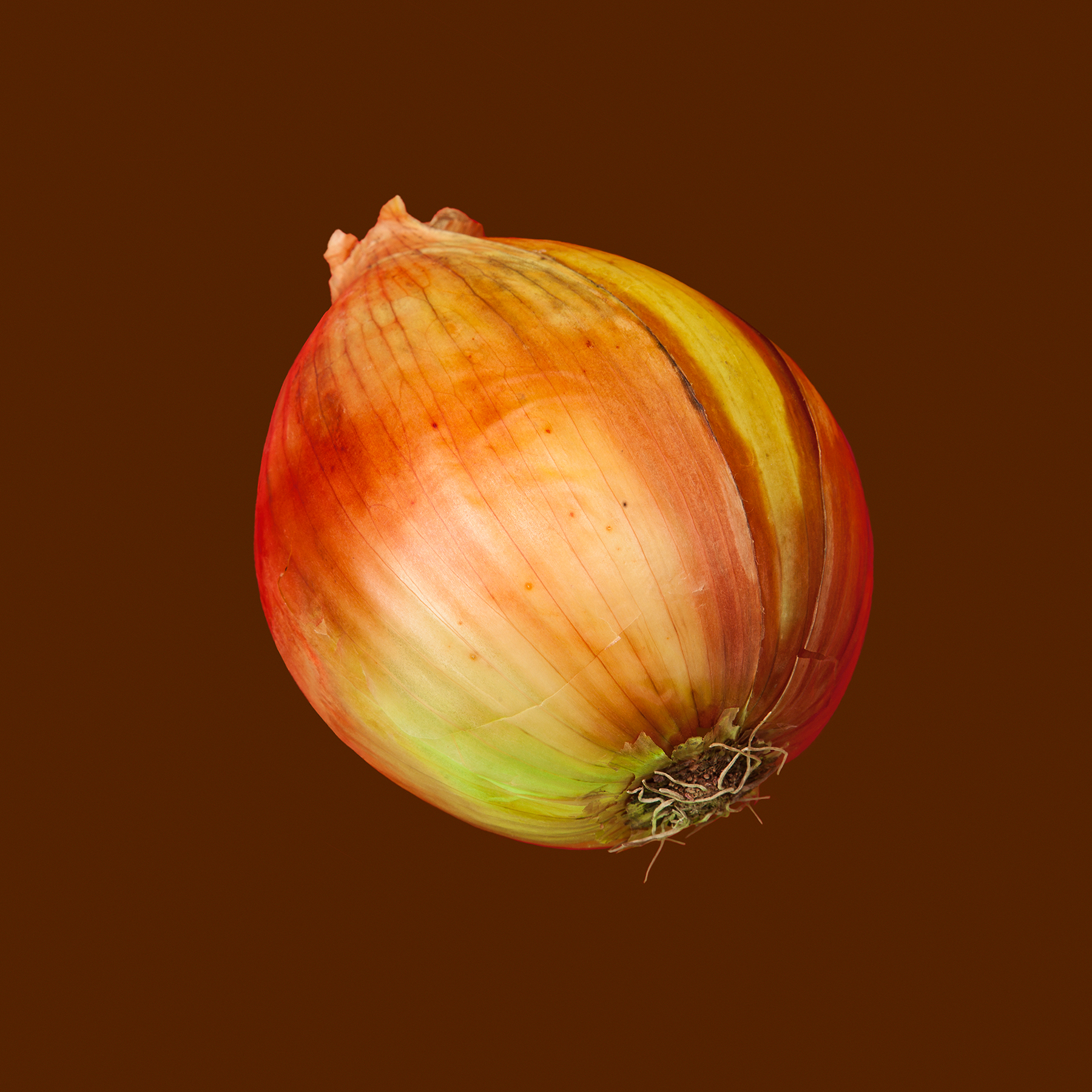 ONION-SWEET-ORGANIC-OINION-VEGETABLE-VFS-RIDGEWAY-FARM-©-JONATHAN-R.-BECKERMAN-PHOTOGRAPHY.jpg