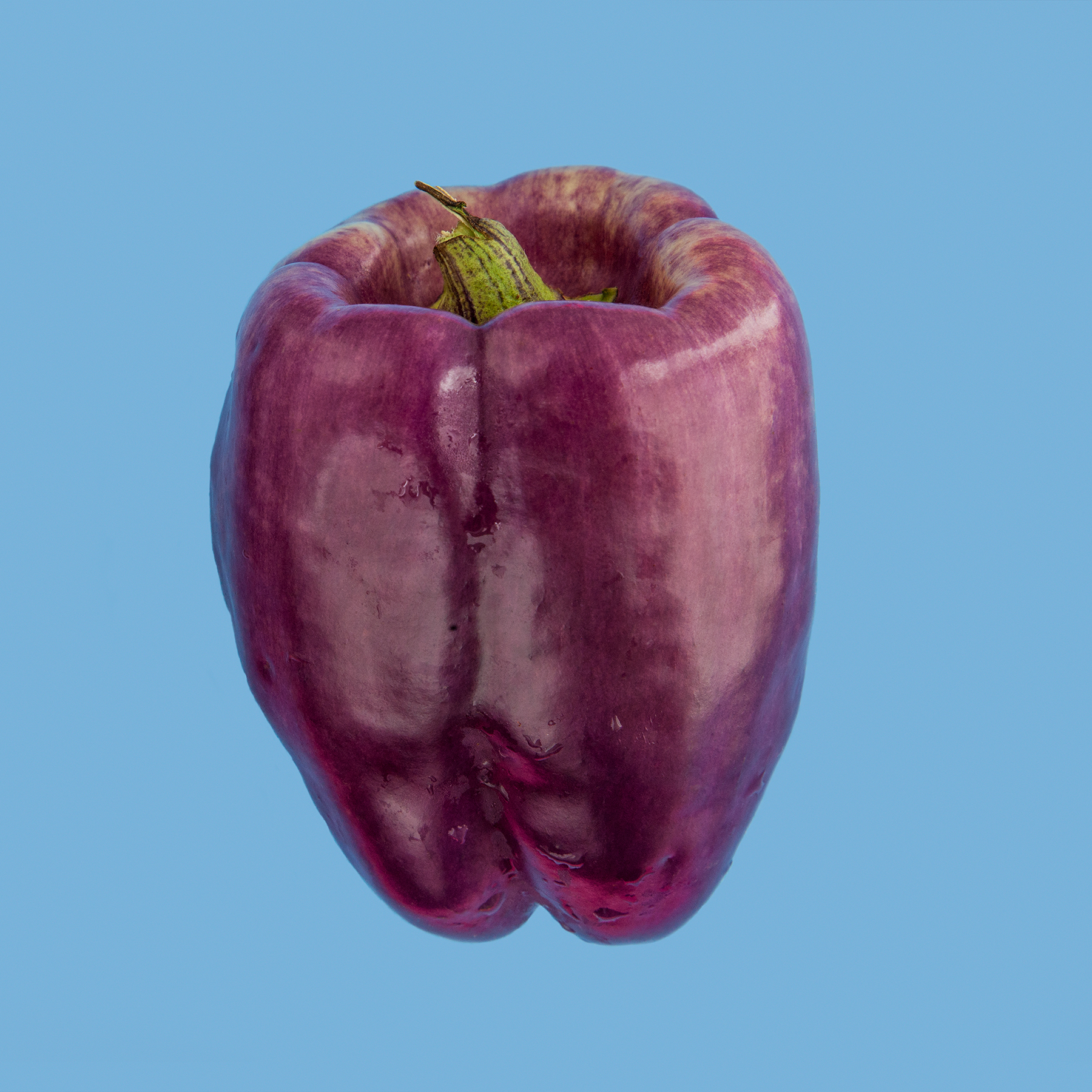 PEPPER-PURPLE-STAR-ORGANIC-HICKORIES-FARM-©-JONATHAN-R.-BECKERMAN-PHOTOGRAPHY-083016_COLOR.jpg