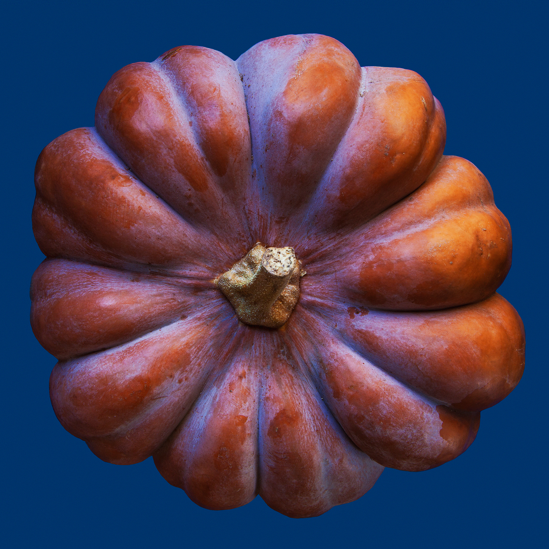 PUMKIN-CINDERELLA-ORGANIC-FOOD-VEGETABLE-©-JONATHAN-R.-BECKERMAN-PHOTOGRAPHY.jpg