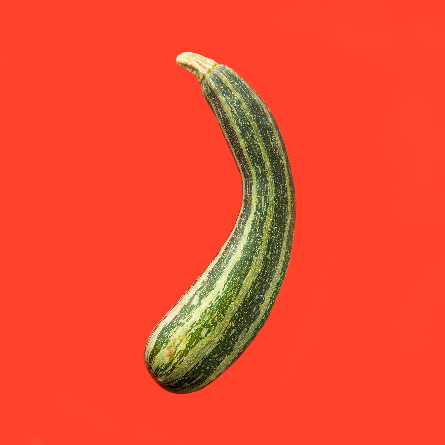 ZUCCHINI-ORGANIC-TIGER-ZUCCHINI-HICKORIES-FARM-©-JONATHAN-R.-BECKERMAN-PHOTOGRAPHY-083016_COLOR.jpg