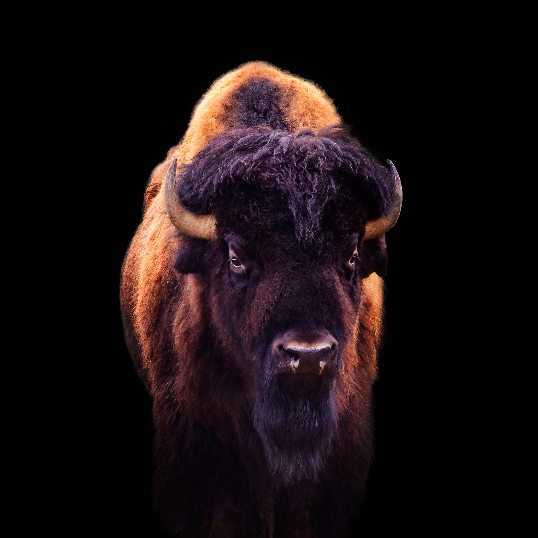 MOWHAWK-BISON-FARM_GOSHEN-©-JONATHAN-R.-BECKERMAN-PHOTOGRAPHY_042015.jpg