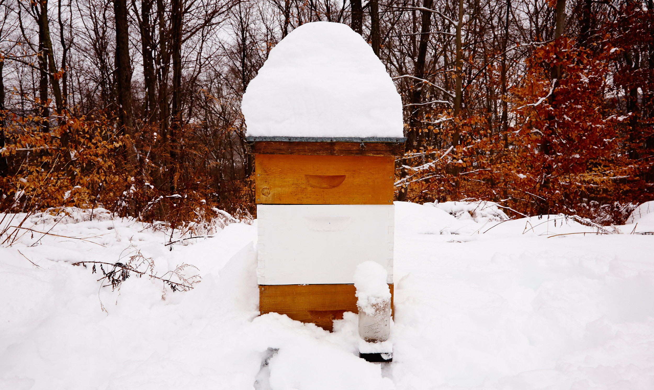 BEE-HIVE-IN-SNOW-WILTSHIRE-FARM-©-JONATHAN-R.-BECKERMAN-PHOTOGRAPHY.jpg
